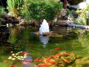 creating-a-koi-pond